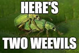 HERE'S TWO WEEVILS | made w/ Imgflip meme maker