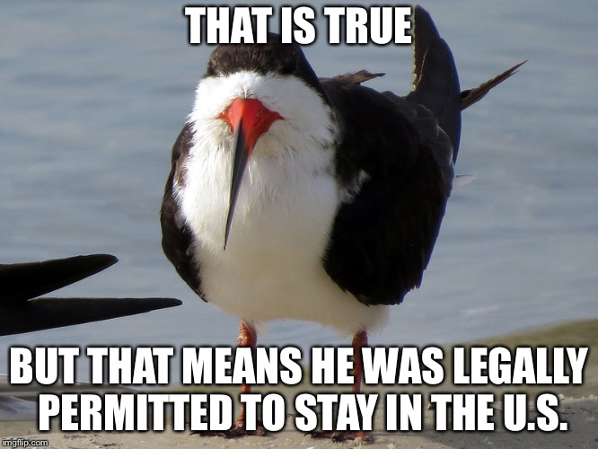 Even Less Popular Opinion Bird | THAT IS TRUE BUT THAT MEANS HE WAS LEGALLY PERMITTED TO STAY IN THE U.S. | image tagged in even less popular opinion bird | made w/ Imgflip meme maker
