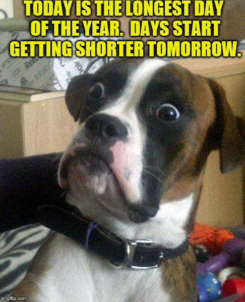 Days Start Getting Shorter - Dog Surprised | TODAY IS THE LONGEST DAY OF THE YEAR.  DAYS START GETTING SHORTER TOMORROW. | image tagged in surprised dog,funny memes,longest day of the year,what,days getting shorter | made w/ Imgflip meme maker