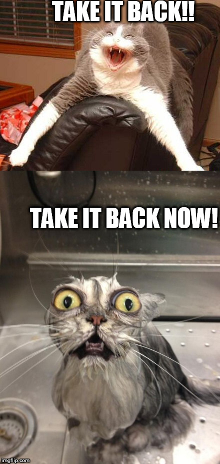 take it back or  I'll go  Pussy  KUNG FU on you! | TAKE IT BACK!! TAKE IT BACK NOW! | image tagged in cat  mad as hillary,pissed off cat,take it back,take it back now | made w/ Imgflip meme maker