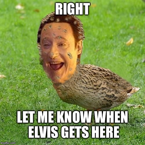 Cool Bullshit Da data duckith | RIGHT LET ME KNOW WHEN ELVIS GETS HERE | image tagged in cool bullshit da data duckith | made w/ Imgflip meme maker