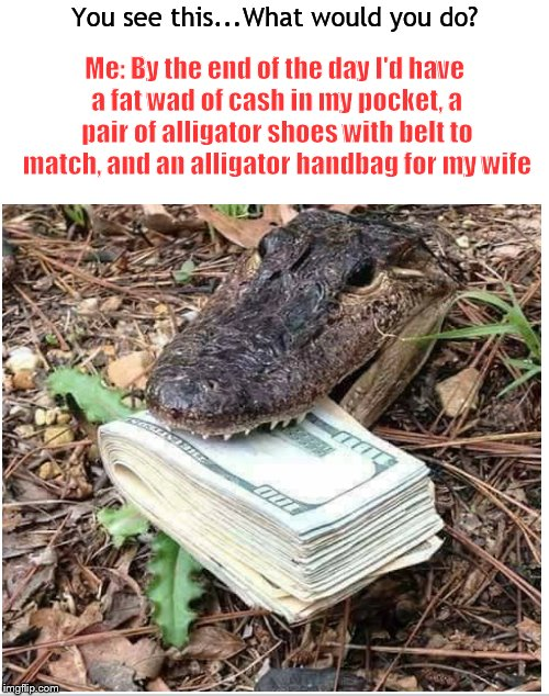 This gator gon' learn today.... | You see this...What would you do? Me: By the end of the day I'd have a fat wad of cash in my pocket, a pair of alligator shoes with belt to  | image tagged in alligator,money,cash,take it,memes,gator | made w/ Imgflip meme maker