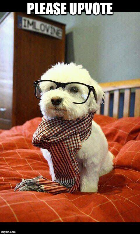 Intelligent Dog | PLEASE UPVOTE | image tagged in memes,intelligent dog | made w/ Imgflip meme maker