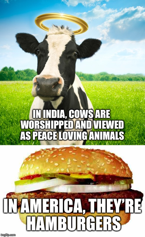 Cultural differences can be made into memes | IN INDIA, COWS ARE WORSHIPPED AND VIEWED AS PEACE LOVING ANIMALS IN AMERICA, THEY'RE HAMBURGERS | image tagged in cow,hamburger,memes | made w/ Imgflip meme maker