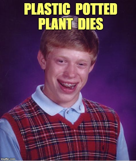 Bad Luck Brian | PLASTIC  POTTED  PLANT  DIES | image tagged in memes,bad luck brian | made w/ Imgflip meme maker