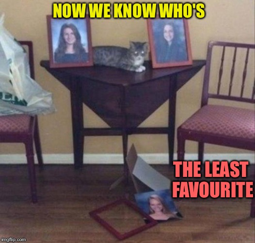 I'm an expert in de-cluttering. | NOW WE KNOW WHO'S THE LEAST FAVOURITE | image tagged in cat,picture,memes,funny | made w/ Imgflip meme maker