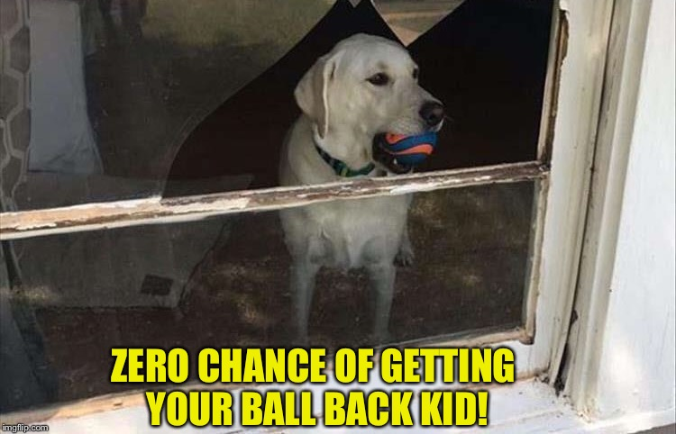 Mine mine mine! | ZERO CHANCE OF GETTING YOUR BALL BACK KID! | image tagged in dog,ball,window,memes,funny | made w/ Imgflip meme maker