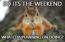 SO ITS THE WEEKEND WHATCHA PLANNING ON DOING? | image tagged in sara squirrel | made w/ Imgflip meme maker