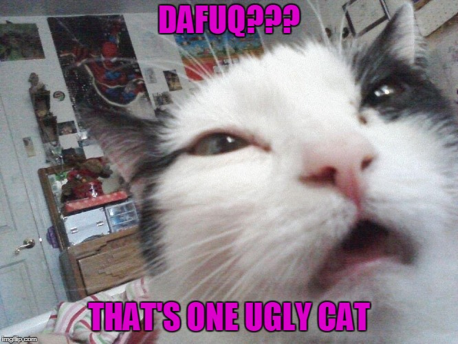 DAFUQ??? THAT'S ONE UGLY CAT | made w/ Imgflip meme maker
