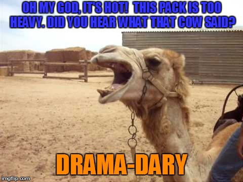 drama-dery | OH MY GOD, IT'S HOT!  THIS PACK IS TOO HEAVY. DID YOU HEAR WHAT THAT COW SAID? DRAMA-DARY | image tagged in drama-dery | made w/ Imgflip meme maker