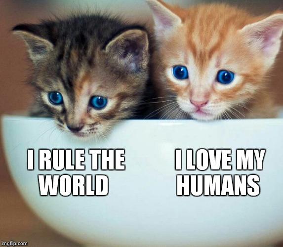 I RULE THE WORLD I LOVE MY HUMANS | image tagged in two kittens in a cup or bowl | made w/ Imgflip meme maker