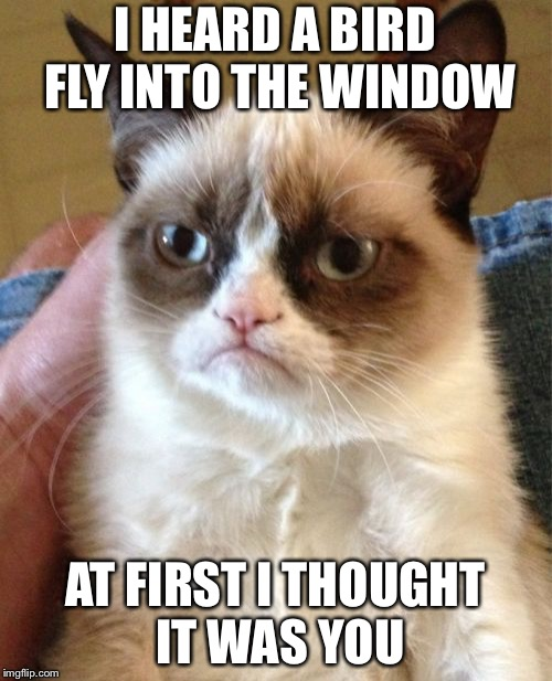 Grumpy Cat Meme | I HEARD A BIRD FLY INTO THE WINDOW AT FIRST I THOUGHT IT WAS YOU | image tagged in memes,grumpy cat | made w/ Imgflip meme maker