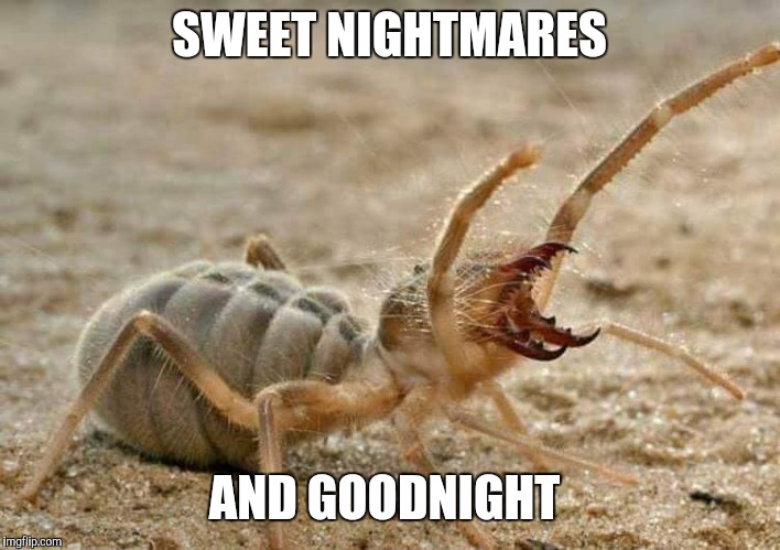 SWEET NIGHTMARES AND GOODNIGHT | image tagged in camel spider | made w/ Imgflip meme maker