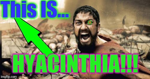 Sparta Leonidas Meme | This IS... HYACINTHIA!!! . | image tagged in memes,sparta leonidas | made w/ Imgflip meme maker