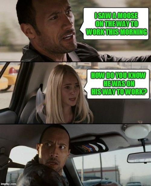 Meanwhile In Canada... | I SAW A MOOSE ON THE WAY TO WORK THIS MORNING HOW DO YOU KNOW HE WAS ON HIS WAY TO WORK? | image tagged in the rock driving,moose,girl,funny meme | made w/ Imgflip meme maker