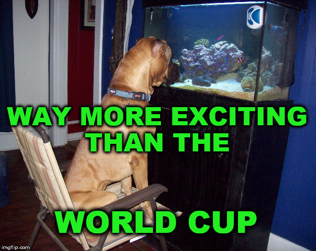 WAY MORE EXCITING THAN THE WORLD CUP | image tagged in dog watching aquarium,world cup boring,more exciting than world cup | made w/ Imgflip meme maker
