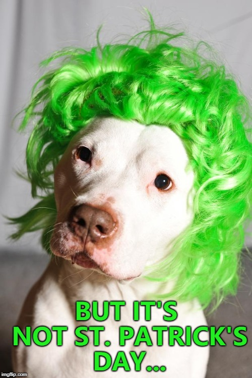 If it was St. Patrick's Day he'd have a Leprechaun hat as well... :)  | BUT IT'S NOT ST. PATRICK'S DAY... | image tagged in green wig dog,memes,st patrick's day | made w/ Imgflip meme maker