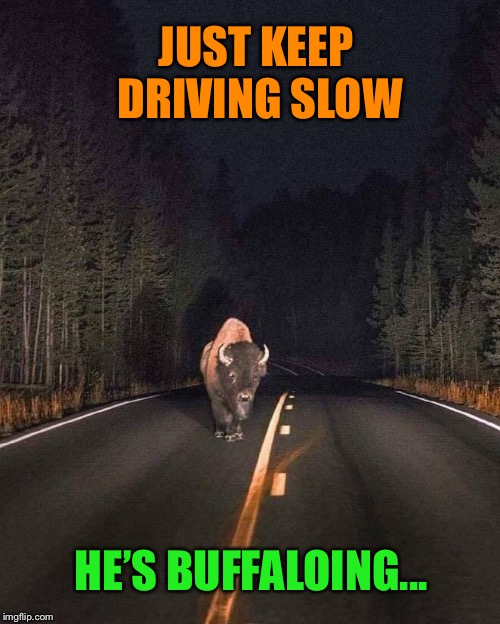 Buffalo stance | JUST KEEP DRIVING SLOW HE'S BUFFALOING... | image tagged in funny animals,street,buffalo,funny memes | made w/ Imgflip meme maker