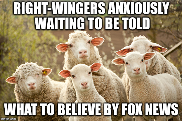 Fox blames non-existent law for Trump separation policy  | RIGHT-WINGERS ANXIOUSLY WAITING TO BE TOLD WHAT TO BELIEVE BY FOX NEWS | image tagged in curious sheep,fox news,right-wingers | made w/ Imgflip meme maker