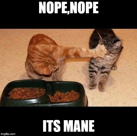 cats share food | NOPE,NOPE ITS MANE | image tagged in cats share food | made w/ Imgflip meme maker
