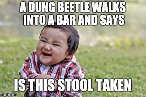 Evil Toddler Meme | A DUNG BEETLE WALKS INTO A BAR AND SAYS IS THIS STOOL TAKEN | image tagged in memes,evil toddler | made w/ Imgflip meme maker
