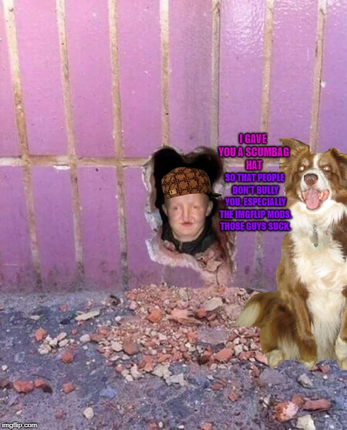 Bald-headed people either get wigs or hats. | I GAVE YOU A SCUMBAG HAT SO THAT PEOPLE DON'T BULLY YOU, ESPECIALLY THE IMGFLIP MODS. THOSE GUYS SUCK. | image tagged in ugly girl in hole in wall,scumbag,chili the border collie,dogs,border collie,bald headed people | made w/ Imgflip meme maker