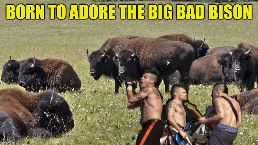 BORN TO ADORE THE BIG BAD BISON | made w/ Imgflip meme maker