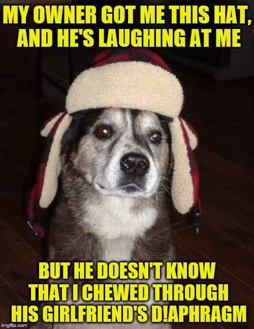 So I guess they're even?  (A kubra_kiel request) | MY OWNER GOT ME THIS HAT, AND HE'S LAUGHING AT ME BUT HE DOESN'T KNOW THAT I CHEWED THROUGH HIS GIRLFRIEND'S D!APHRAGM | image tagged in hunting dog,memes,personal challenge,hats,dogs | made w/ Imgflip meme maker