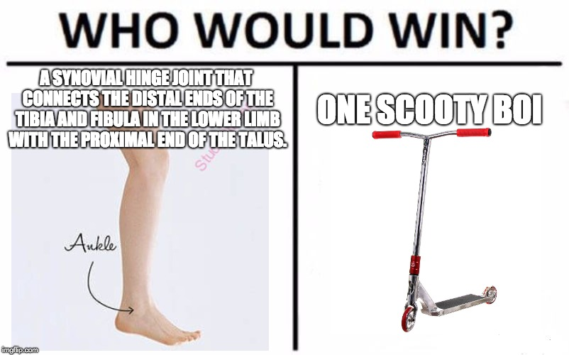 Who Would Win? Meme | A SYNOVIAL HINGE JOINT THAT CONNECTS THE DISTAL ENDS OF THE TIBIA AND FIBULA IN THE LOWER LIMB WITH THE PROXIMAL END OF THE TALUS. ONE SCOOT | image tagged in memes,who would win | made w/ Imgflip meme maker