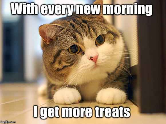With every new morning I get more treats | made w/ Imgflip meme maker