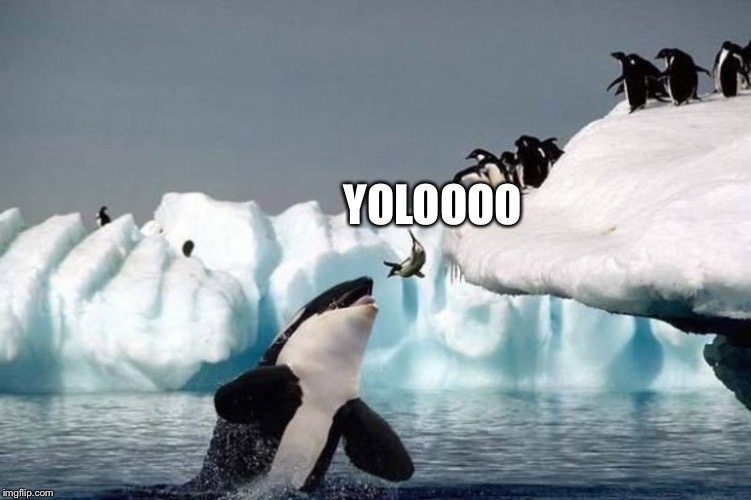 Random third submission, ran out of ideas. | YOLOOOO | image tagged in killer whale and seal,third submission,yolo | made w/ Imgflip meme maker