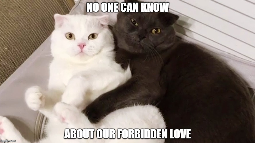Image Tagged In Funny Cat Memescatsblack And Whiteromance
