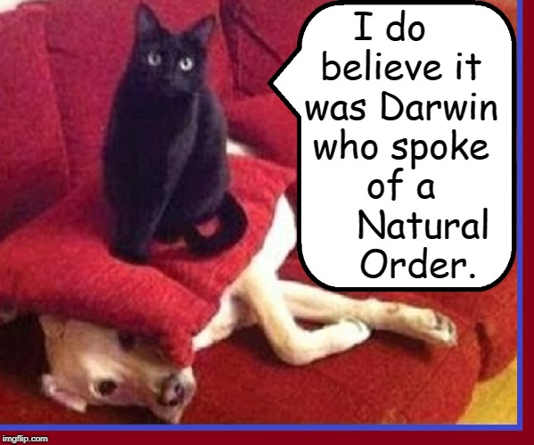 Cat Logic:  On Dogs | I do  believe it was Darwin who spoke of a     Natural    Order. | image tagged in vince vance,cat logic,cats,funny cat memes,charles darwin,the origin of species | made w/ Imgflip meme maker