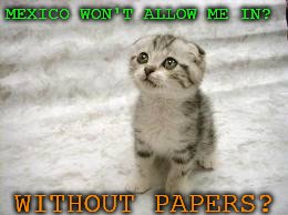 Sad Cat | MEXICO WON'T ALLOW ME IN? WITHOUT PAPERS? | image tagged in memes,sad cat | made w/ Imgflip meme maker