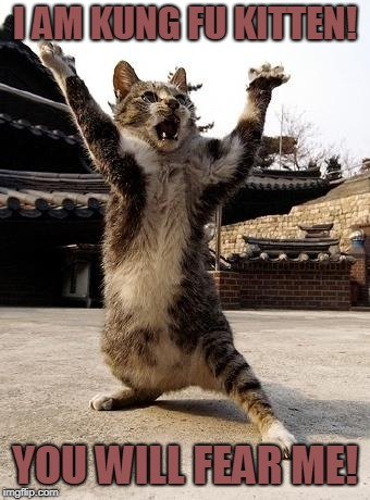 kung fu kitten | I AM KUNG FU KITTEN! YOU WILL FEAR ME! | image tagged in kung fu kitten | made w/ Imgflip meme maker