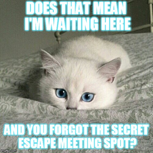 DOES THAT MEAN I'M WAITING HERE AND YOU FORGOT THE SECRET ESCAPE MEETING SPOT? | made w/ Imgflip meme maker