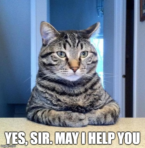 Serious Cat | YES, SIR. MAY I HELP YOU | image tagged in serious cat | made w/ Imgflip meme maker