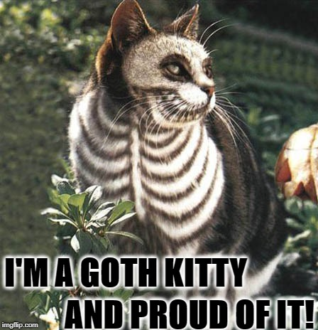 I'M A GOTH KITTY AND PROUD OF IT! | image tagged in goth kitty | made w/ Imgflip meme maker