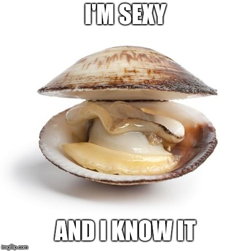 clam | I'M SEXY AND I KNOW IT | image tagged in clam | made w/ Imgflip meme maker