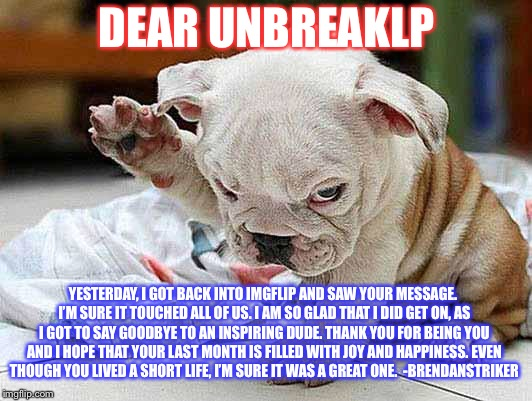 My salute to UnbreakLP | DEAR UNBREAKLP YESTERDAY, I GOT BACK INTO IMGFLIP AND SAW YOUR MESSAGE. I'M SURE IT TOUCHED ALL OF US. I AM SO GLAD THAT I DID GET ON, AS I  | image tagged in dog salute,unbreaklp,animals,salute | made w/ Imgflip meme maker