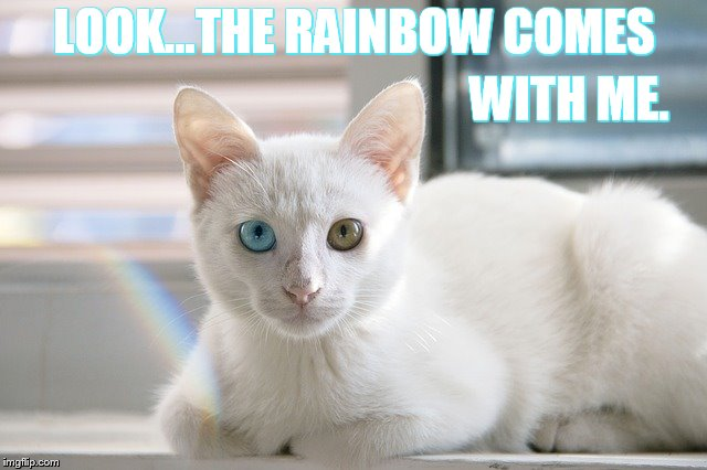 A Happy Thought | LOOK...THE RAINBOW COMES WITH ME. | image tagged in memes,cute cat,rainbow,comes with,me,happy days | made w/ Imgflip meme maker