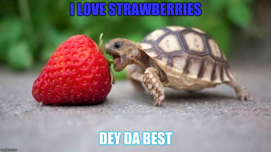 I saw this turtle so I gave him a STRAWBERRIES | I LOVE STRAWBERRIES DEY DA BEST | image tagged in youtube | made w/ Imgflip meme maker