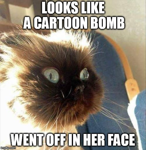 Acme Kitty  | LOOKS LIKE A CARTOON BOMB WENT OFF IN HER FACE | image tagged in funny | made w/ Imgflip meme maker