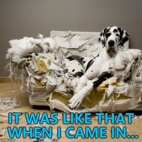 I'm not going to argue with him... :) | IT WAS LIKE THAT WHEN I CAME IN... | image tagged in dog destroys couch,memes,pets,animals | made w/ Imgflip meme maker