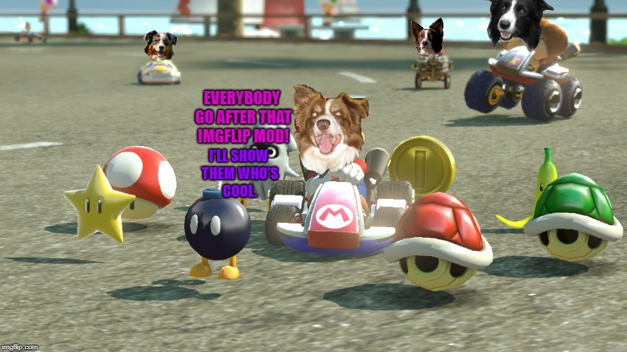 Imgflip mods are dumb. They don't know how cool my memes are. | EVERYBODY GO AFTER THAT IMGFLIP MOD! I'LL SHOW THEM WHO'S COOL. | image tagged in mario kart,chili the border collie,dogs,border collie,imgflip mods | made w/ Imgflip meme maker