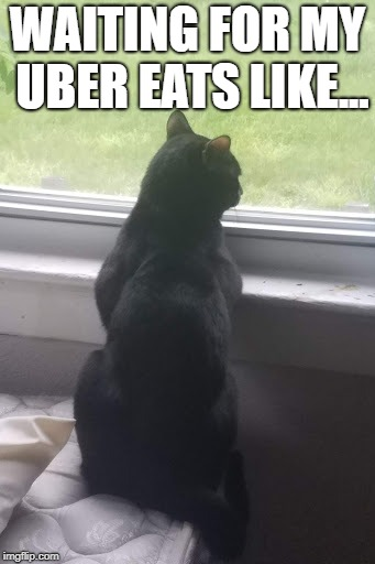 WAITING FOR MY UBER EATS LIKE... | image tagged in hungry cat,uber eats,mad hungry,waiting patiently,still hungry | made w/ Imgflip meme maker
