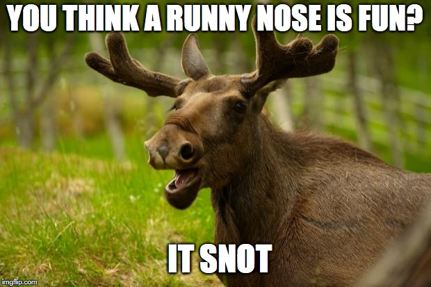 Bad Pun Moose | YOU THINK A RUNNY NOSE IS FUN? IT SNOT | image tagged in bad pun moose,snot | made w/ Imgflip meme maker