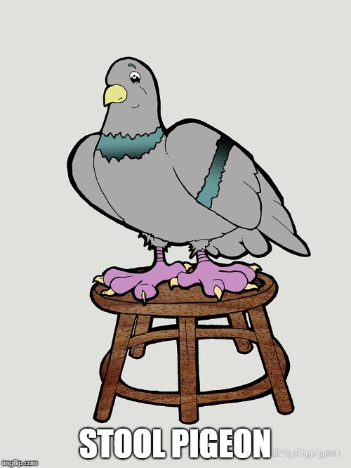 STOOL PIGEON | made w/ Imgflip meme maker