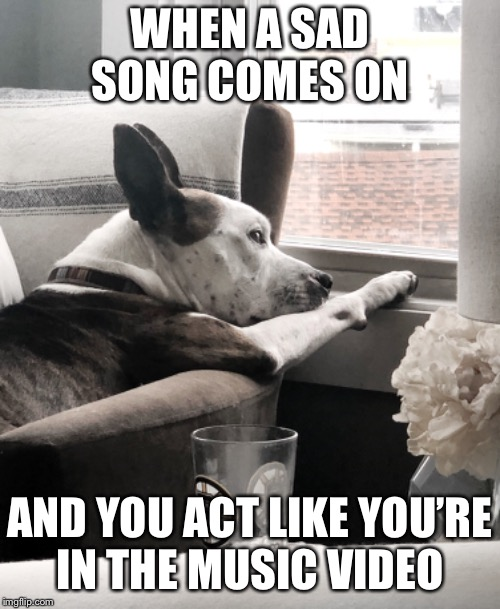 Dramatic dog | WHEN A SAD SONG COMES ON AND YOU ACT LIKE YOU'RE IN THE MUSIC VIDEO | image tagged in funny memes,dramatic,sad,dog | made w/ Imgflip meme maker