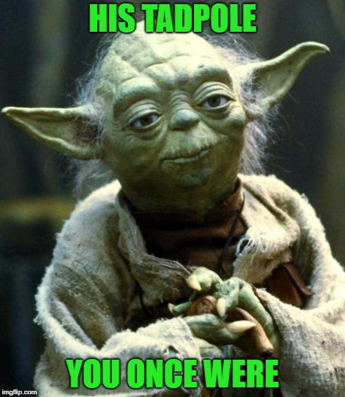 Star Wars Yoda Meme | HIS TADPOLE YOU ONCE WERE | image tagged in memes,star wars yoda | made w/ Imgflip meme maker